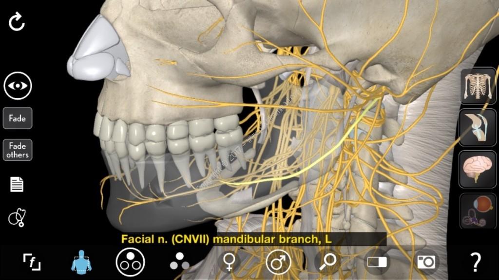 3D Organon Anatomy Crack